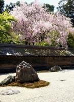 garden/庭園: un album sur Flickr