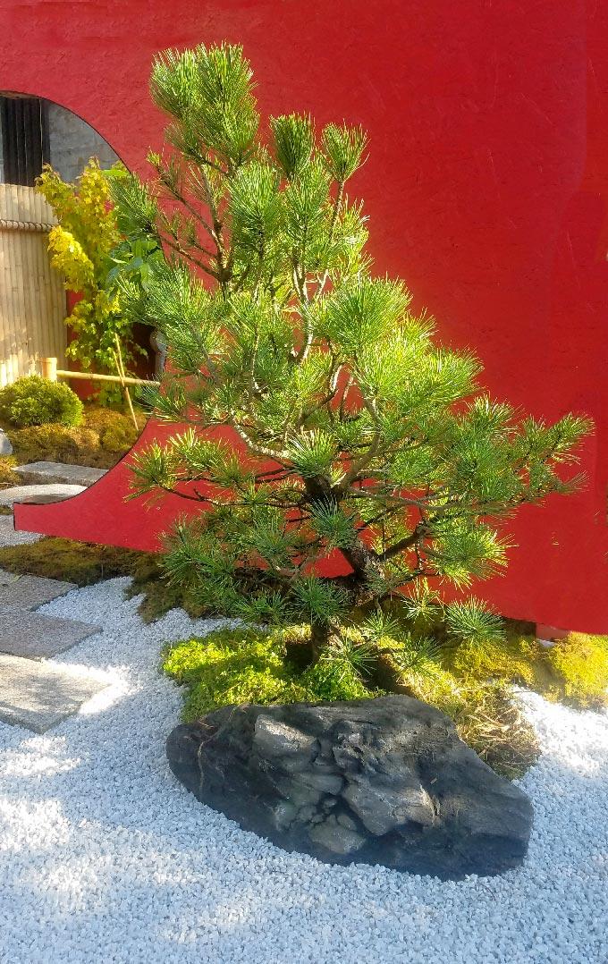 Pin Jardin Japonais paroi de bois paroi de bambou graviers pierre