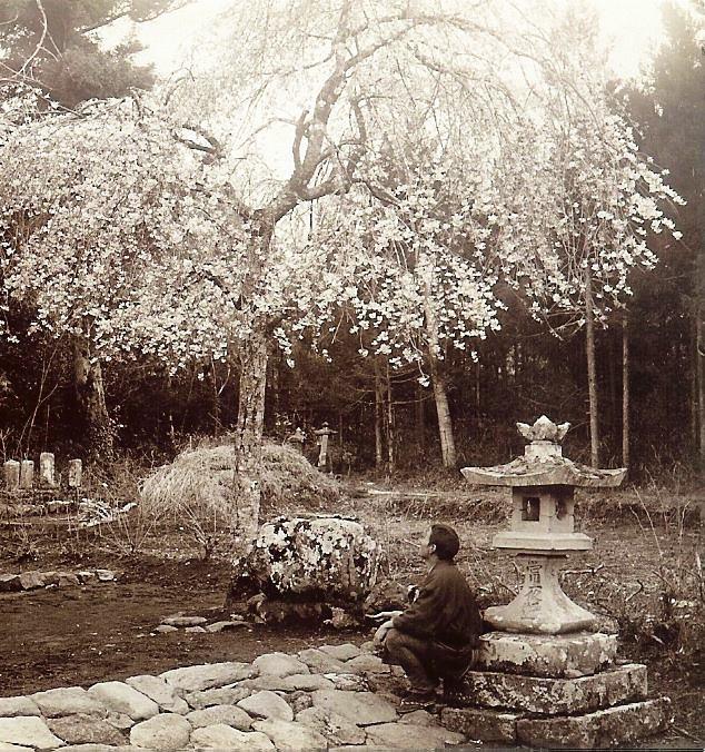 Sérénité du jardin japonais ancien