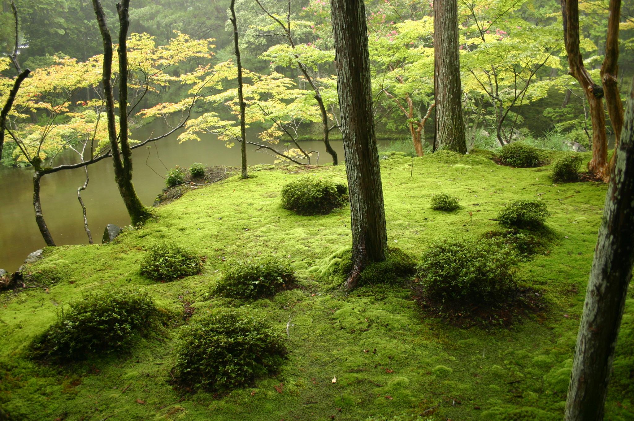 mousse jardin
