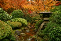 Rhone Street Gardens: Autumn at The Portland Japanese Garden