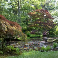 Japanese Garden - Spring Opening 2012 | The Hague Photo Journal