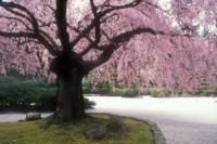Flat Garden | Portland Japanese Garden