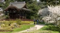 Visit Kew Gardens - Japanese Landscape