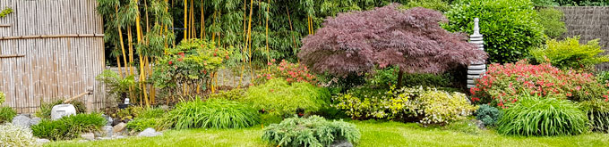 Jardin japonais: Choisir ses plantes