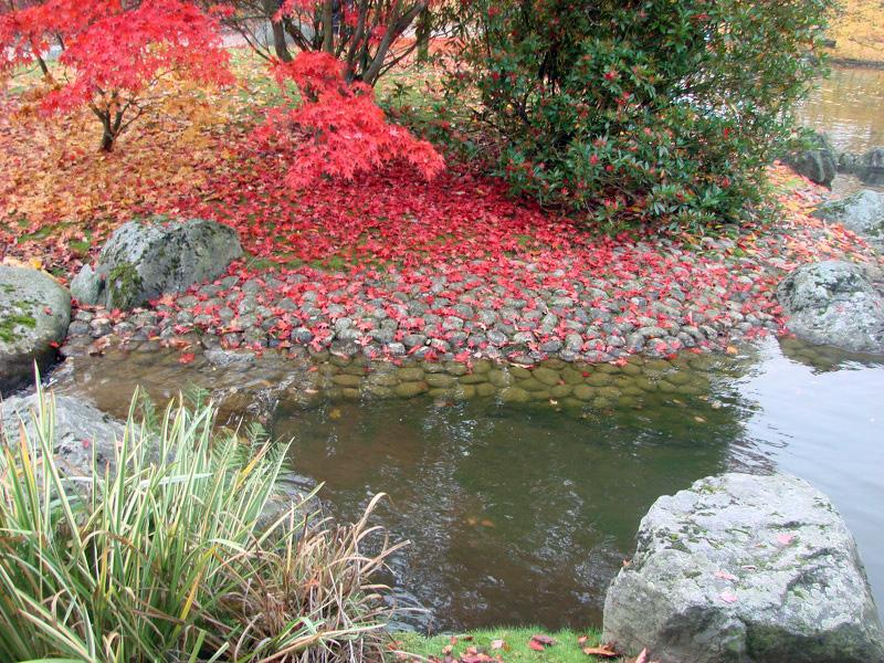 plage de galet sous les feuilles d 39 rable photos de jardin japonais. Black Bedroom Furniture Sets. Home Design Ideas